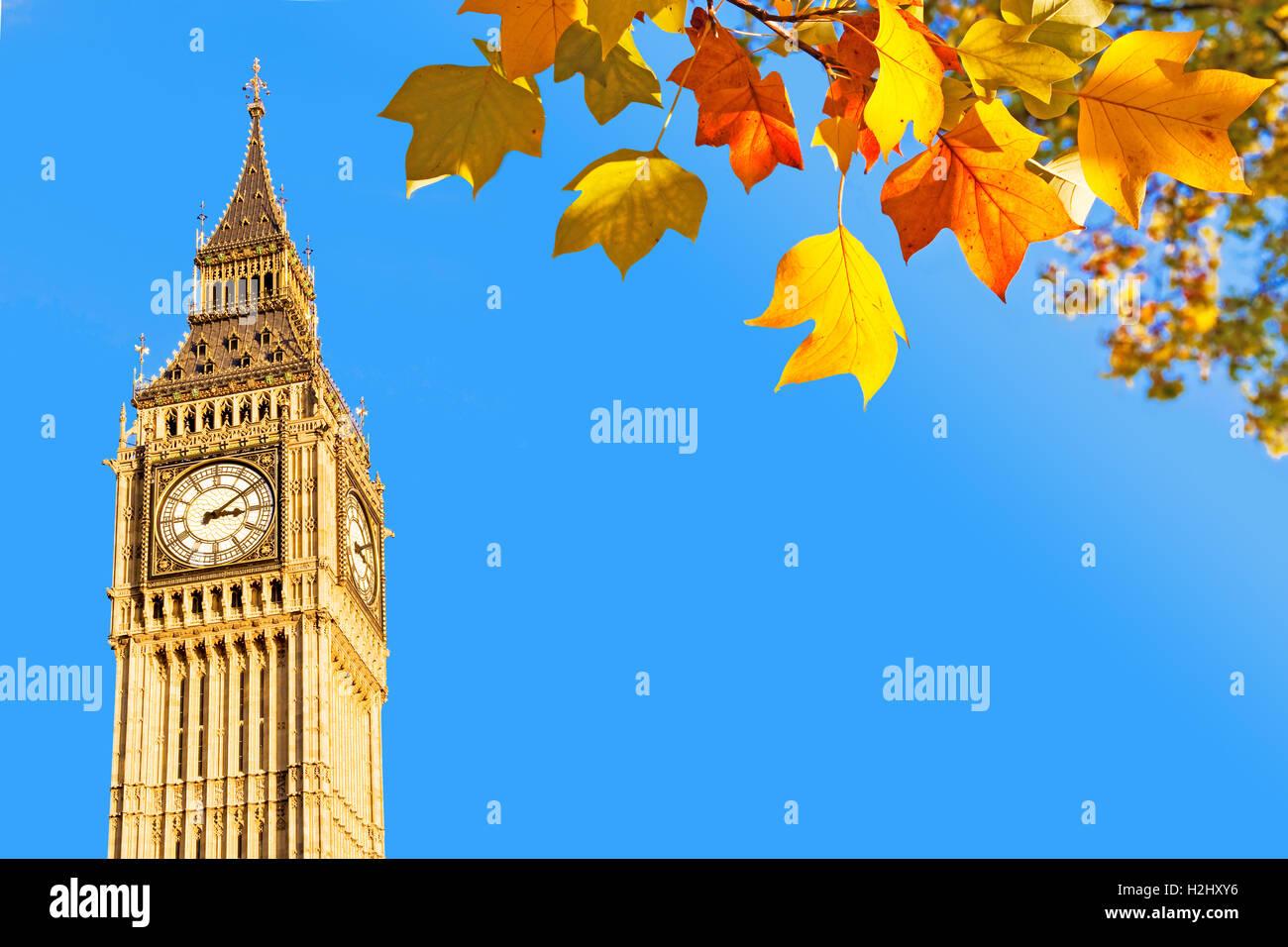 Big Ben and autumnal leaves, London, UK - Stock Image