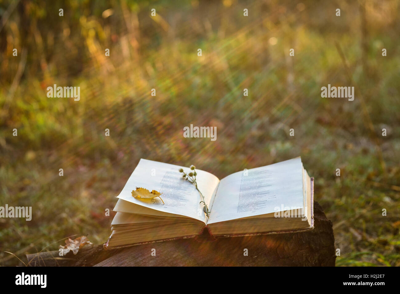 Poetry book with fallen leaves and flower on it - Stock Image