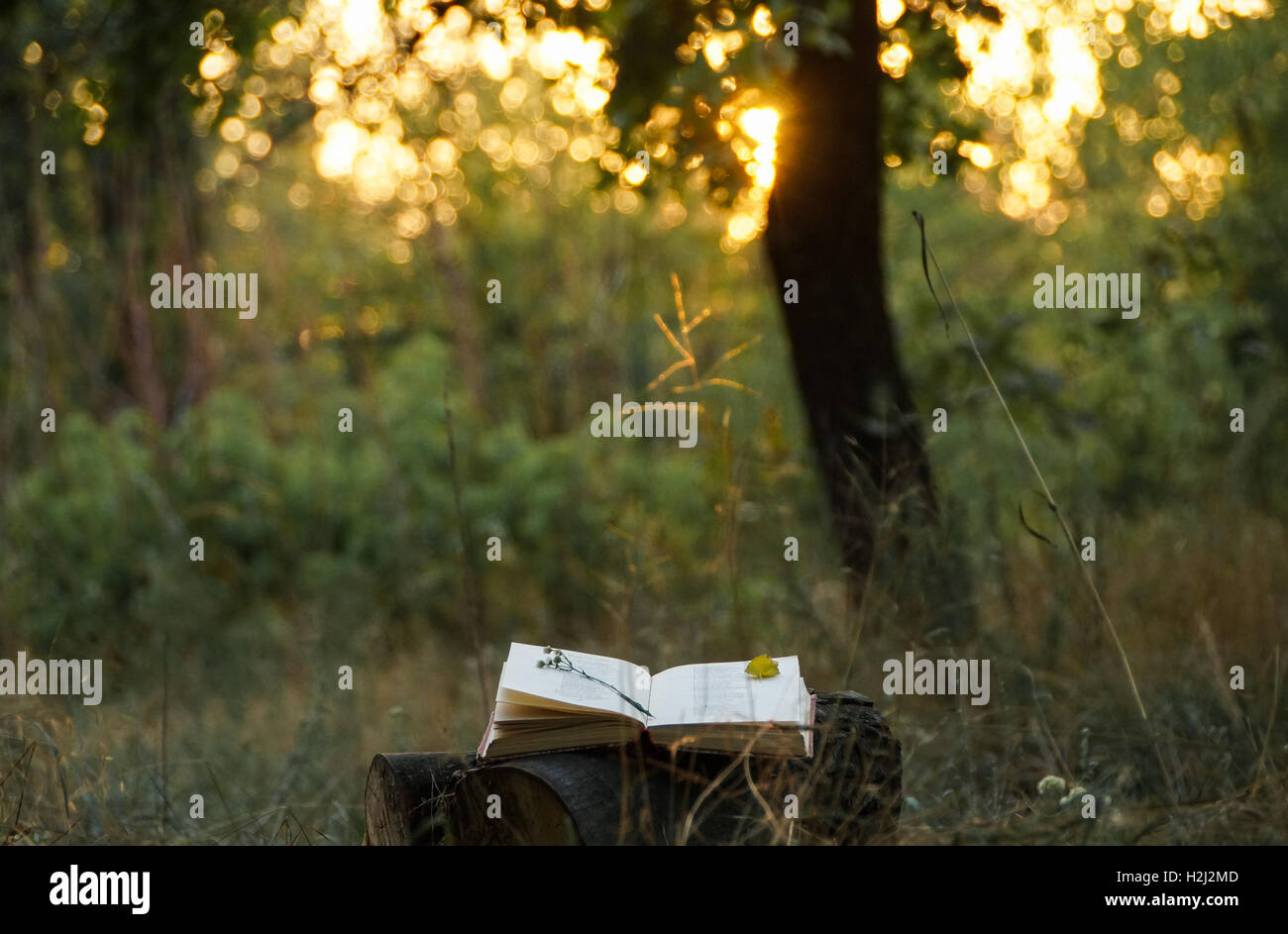 Poetry book under tree and blurs of  summer sunset background - Stock Image