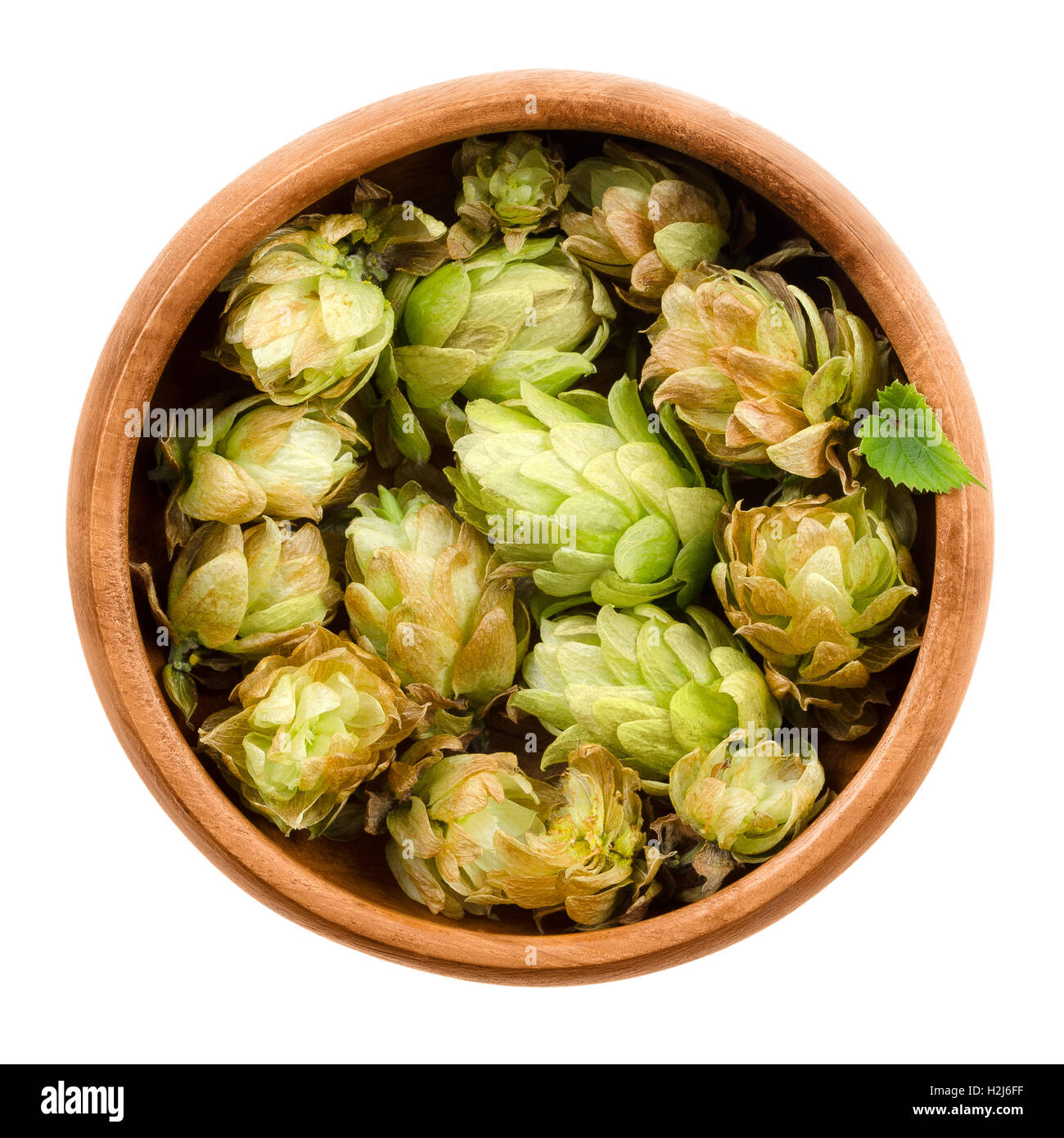 Hops in wooden bowl on white background. Half dried seed cones from the hop plant, Humulus lupulus. - Stock Image