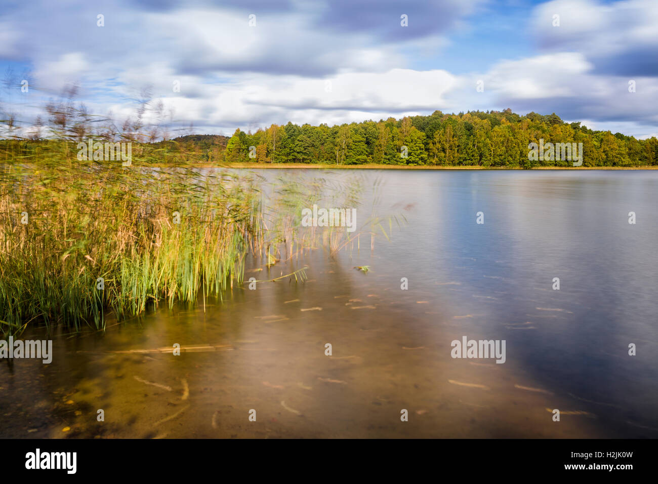 Reeds and lake beautiful typical swedish summer long exposure landscape waterscape  Model Release: No.  Property - Stock Image