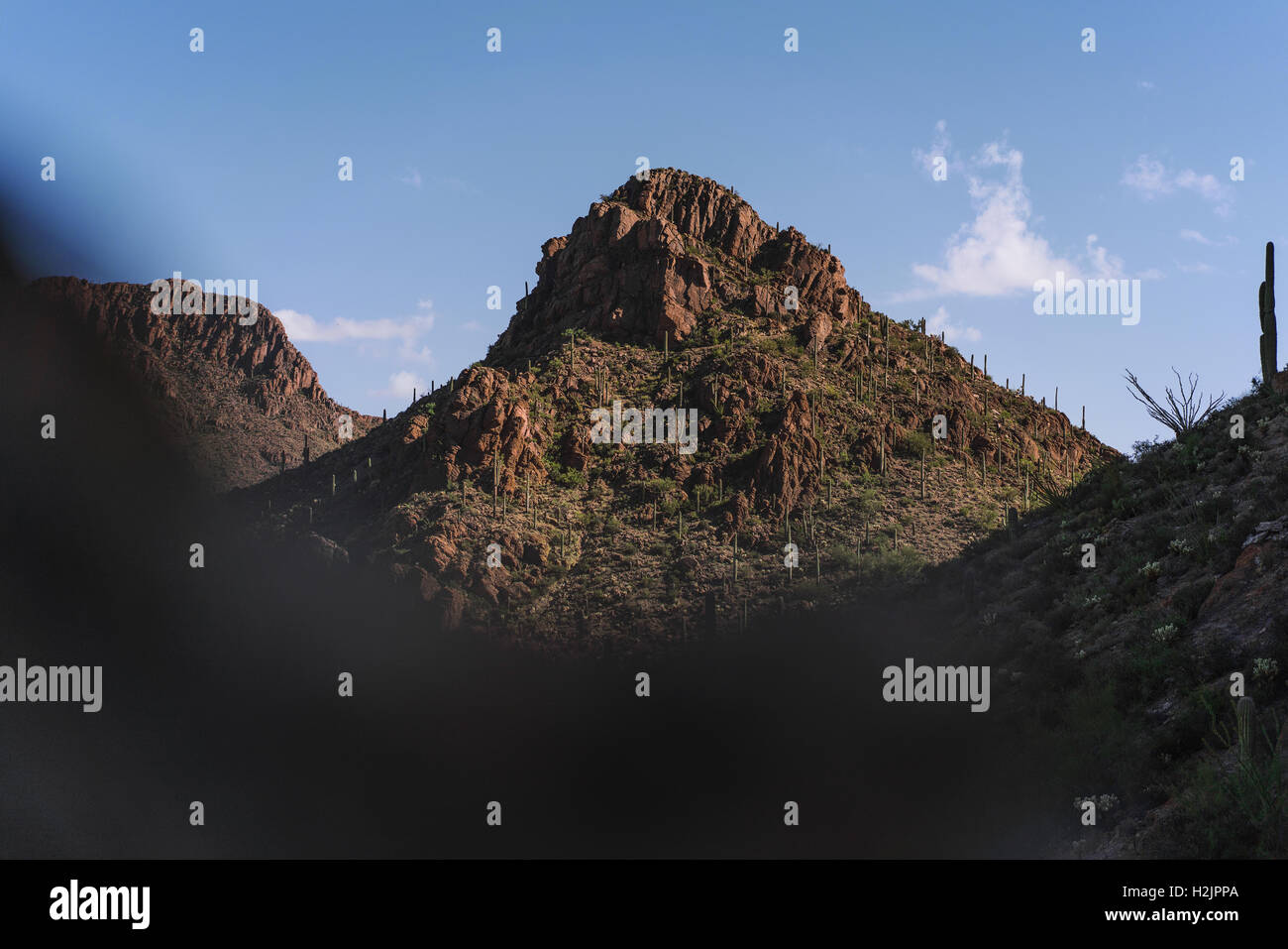 Saguaro National Park - Stock Image
