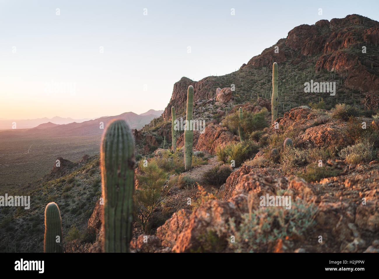 Evening light shines on the desert of Arizona's Saguaro National Park Stock Photo
