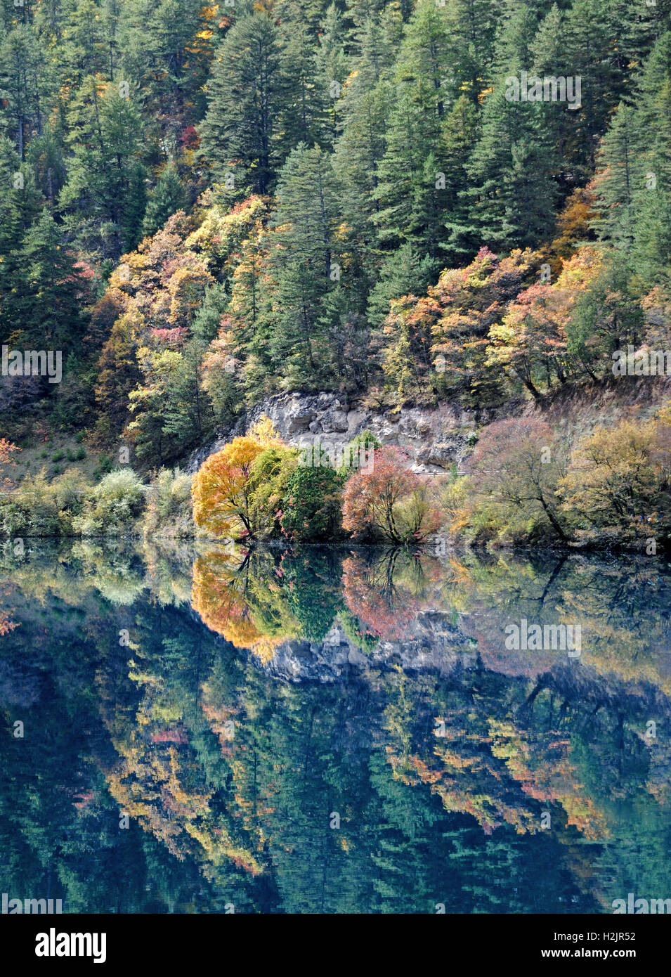 Autumn Colors In Vilas Park Lagoon >> The Autumn Colors Of Pine Trees Reflect In The Emerald Waters Of