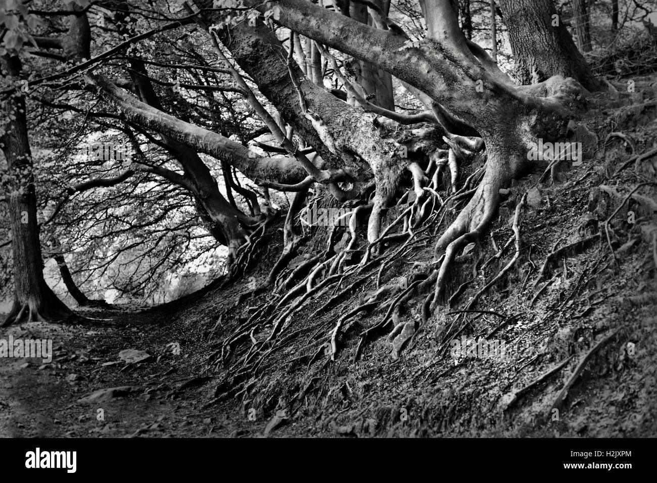 Spooky tree line - Stock Image