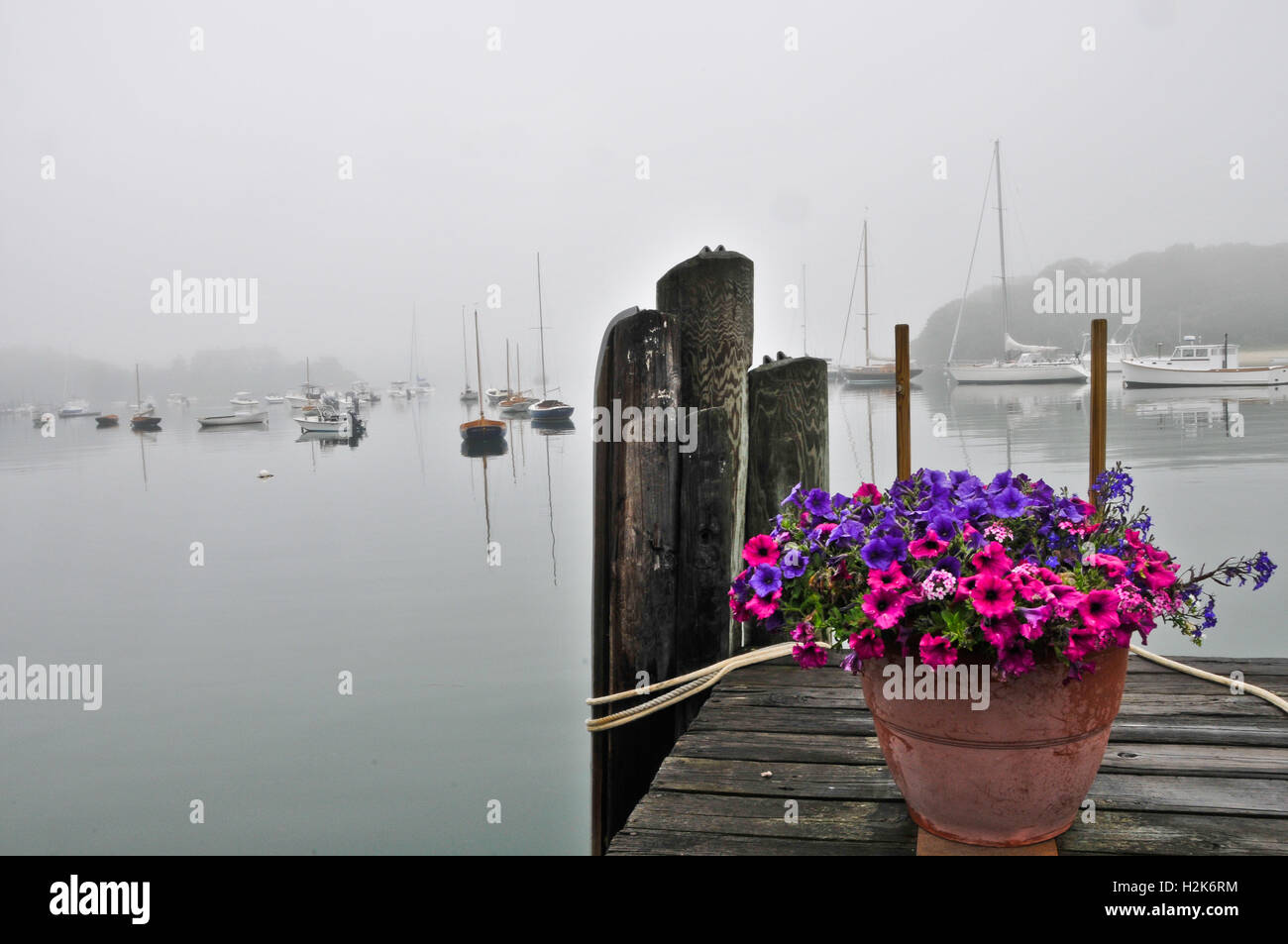 Foggy morning on the dock at Quissett Harbor Woods Hole Falmouth Massachussetts Cape Code. - Stock Image