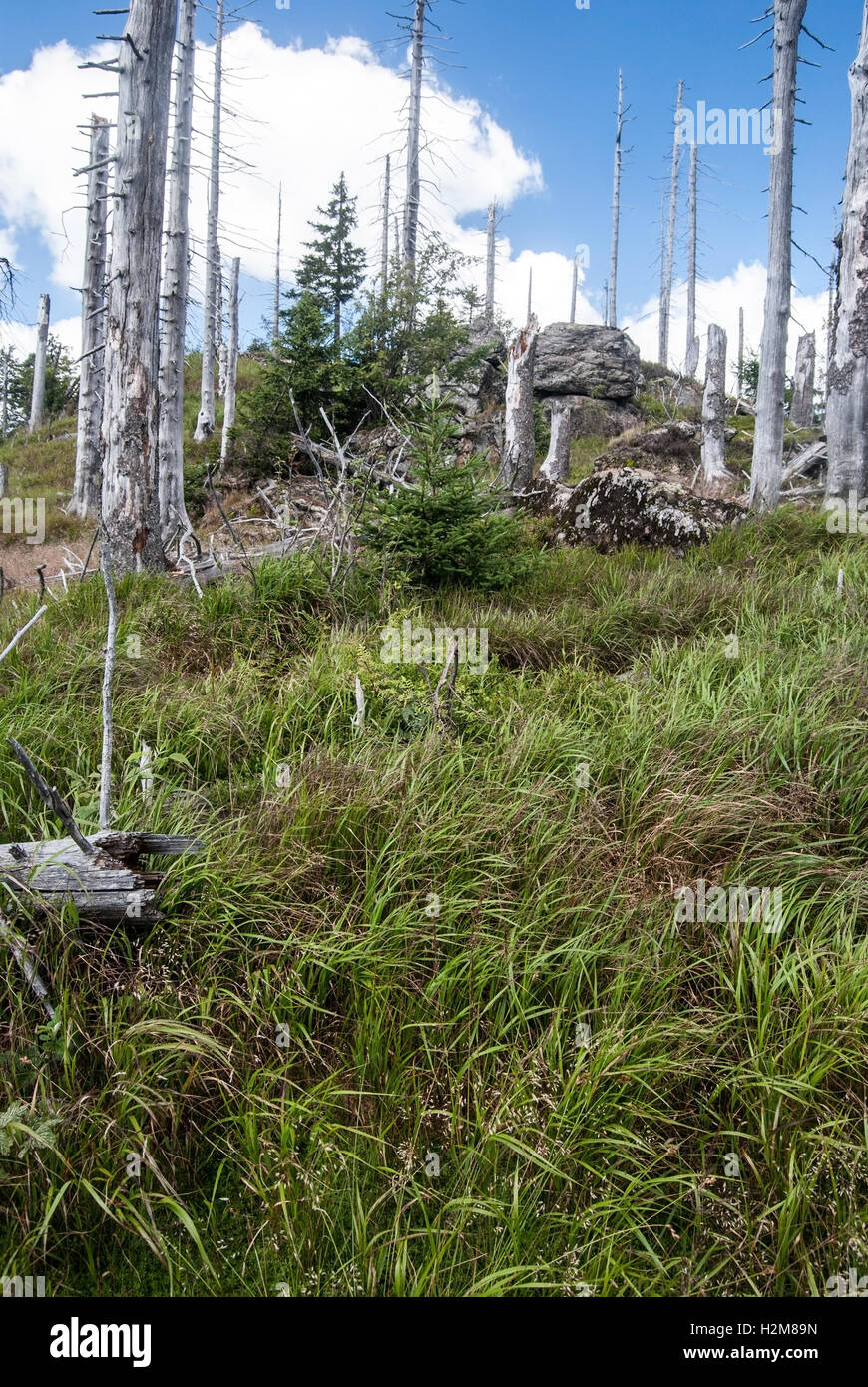 Kleiner Rachel hill with small rock formation and trees devastated by bark beetle infestation in Bavarian Forest - Stock Image