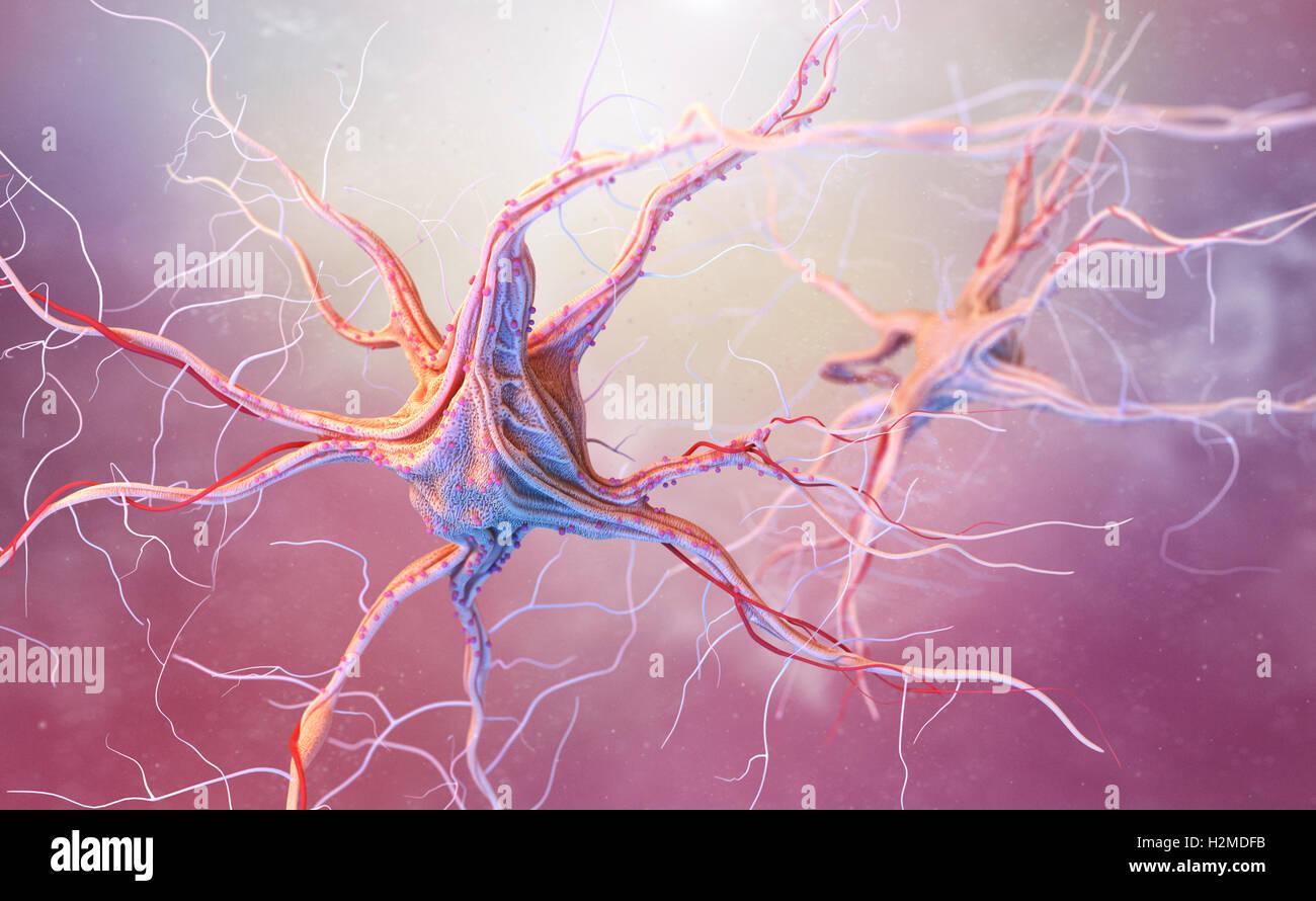 Neurons and nervous system. 3d render of nerve cells - Stock Image