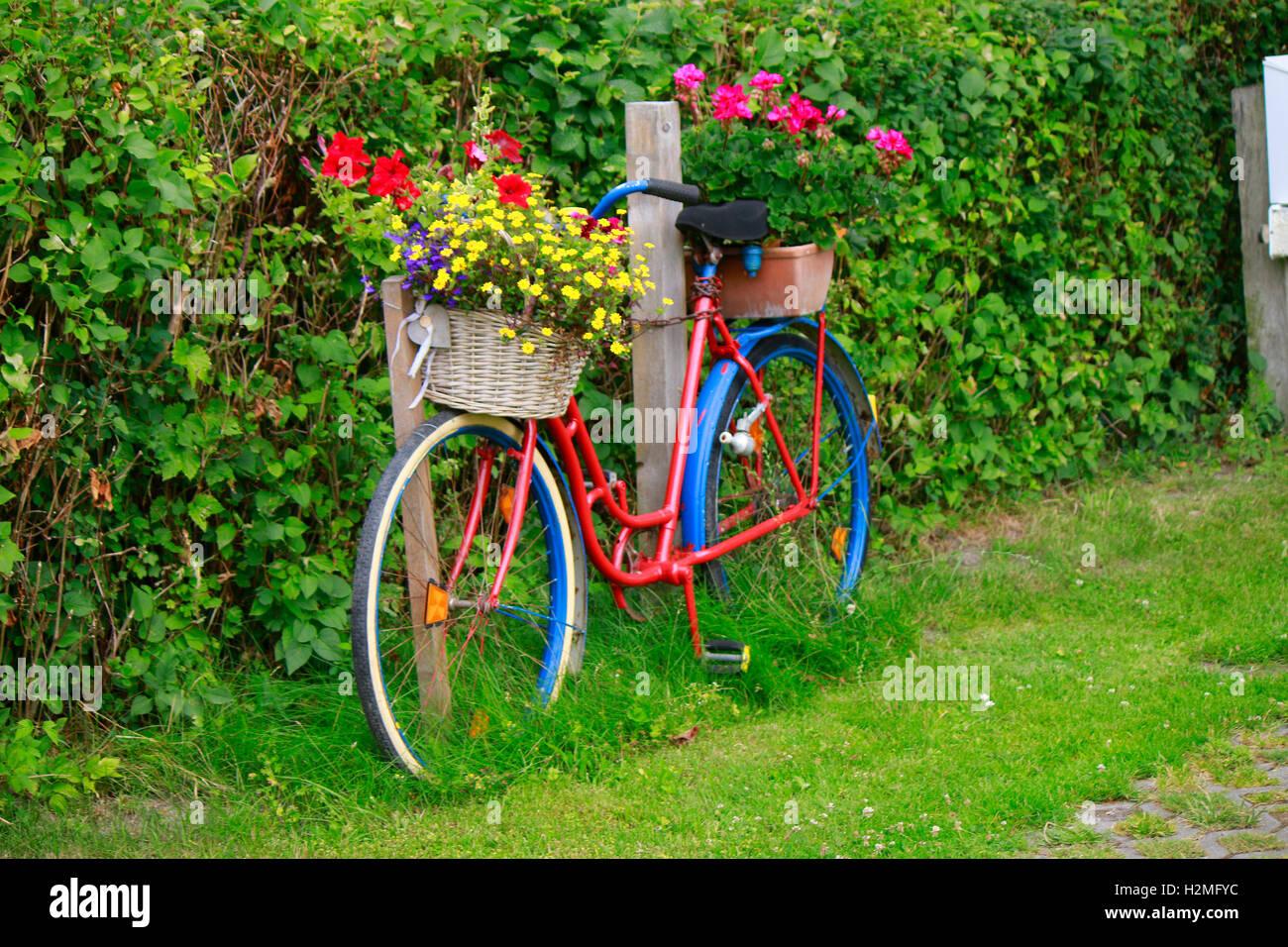 Fahrrad, Blumen, Ruegen. Stock Photo