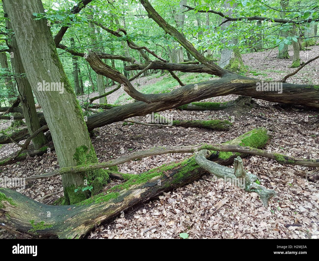 Totholz, Baumstamm - Stock Image