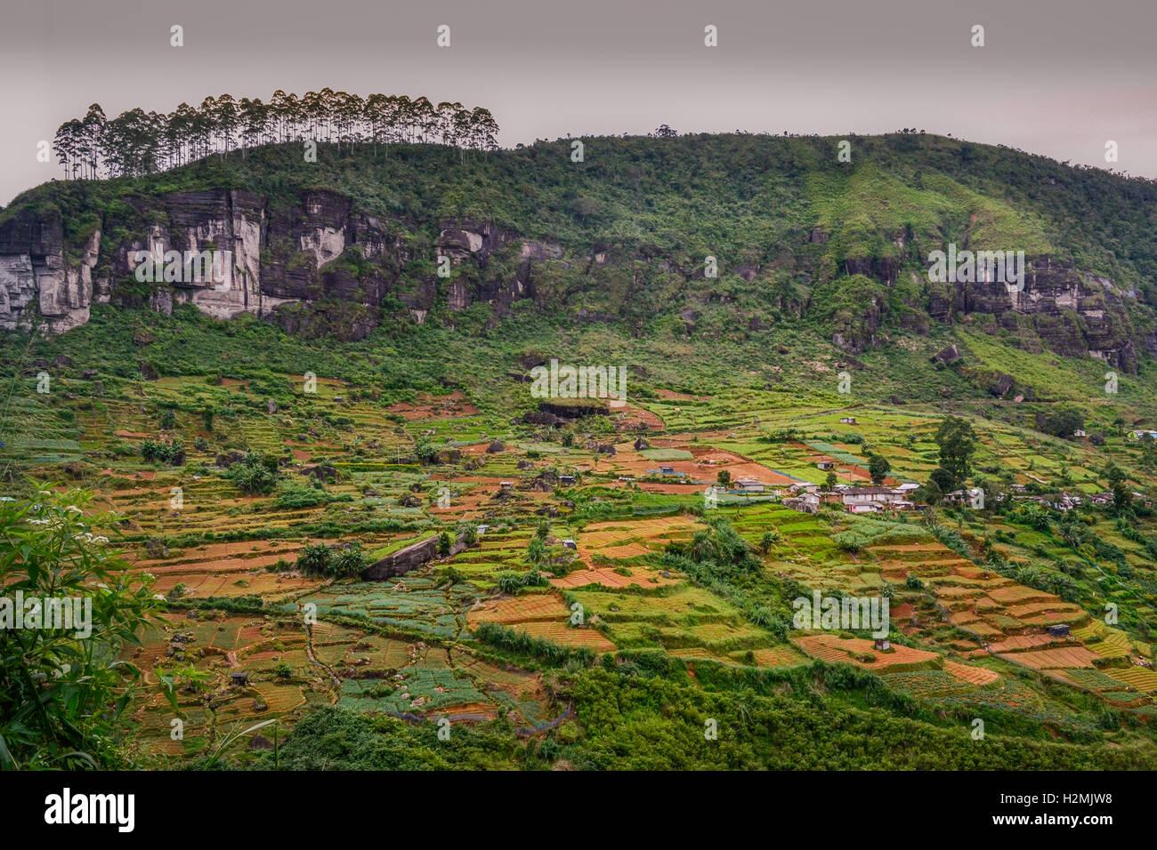 sri lanka, tea templations, rice fields, palm trees, nuwara eliya - Stock Image