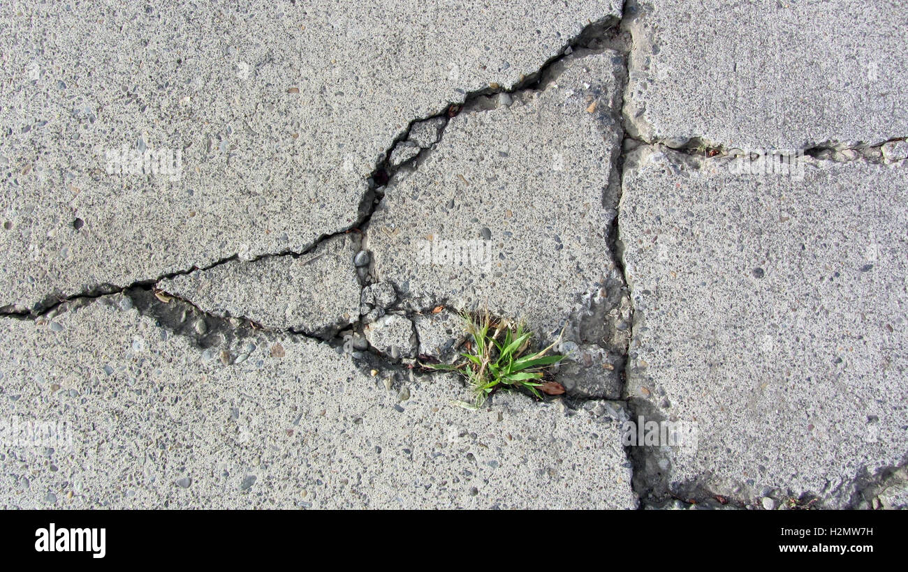 how to grow grass on a concrete wall