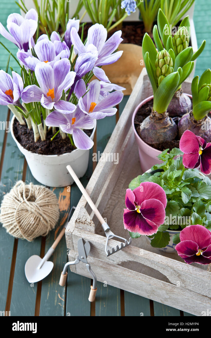 Various potted spring flowers stock photo 122162716 alamy various potted spring flowers mightylinksfo