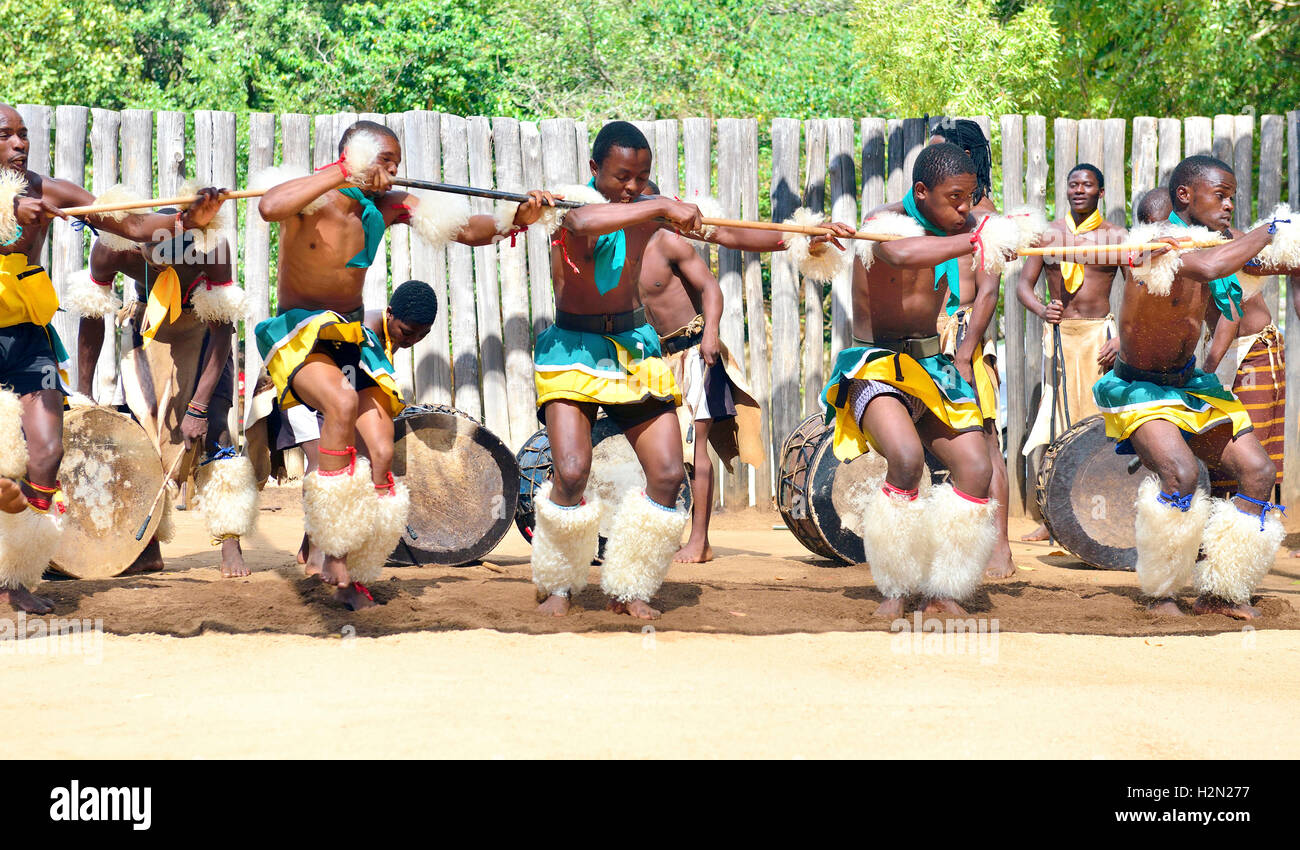 Swazi dance troupe in traditional clothes chanting singing and dancing  The Sibhaca at Mantenga Cultural Village, Stock Photo