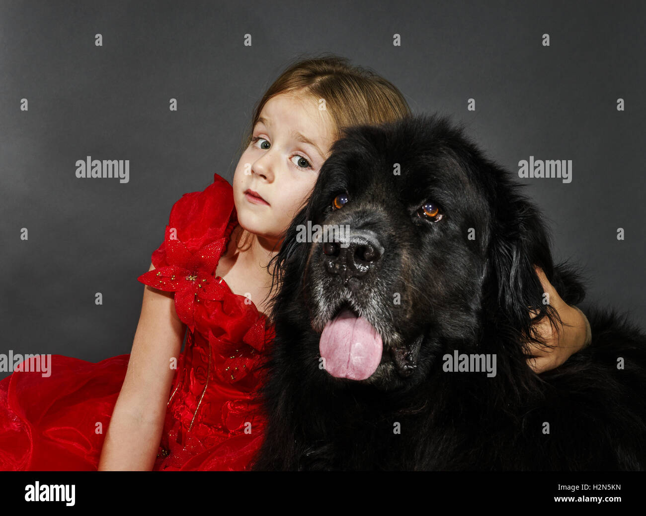 Beauty and the Beast. Little girl with big black water-dog portrait, isolated on grey - Stock Image
