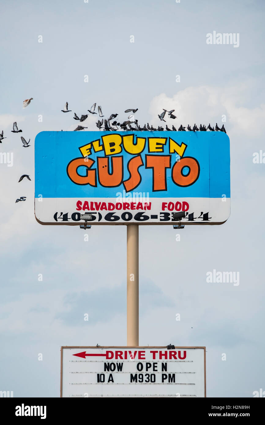 Pigeons or rock doves, Columba livia, flock on the pole sign of El Buen Gusto, 2116 SW 74th, Oklahoma City, Oklahoma, - Stock Image