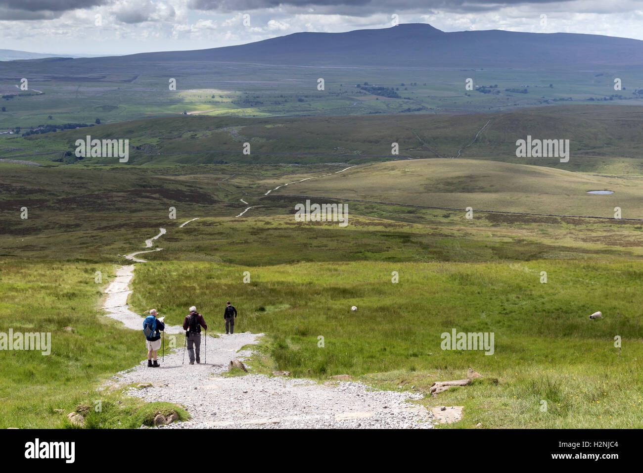 Walkers descend the Pennine Way path on Pen-y-ghent, with Ingleborough in the far distance - Stock Image
