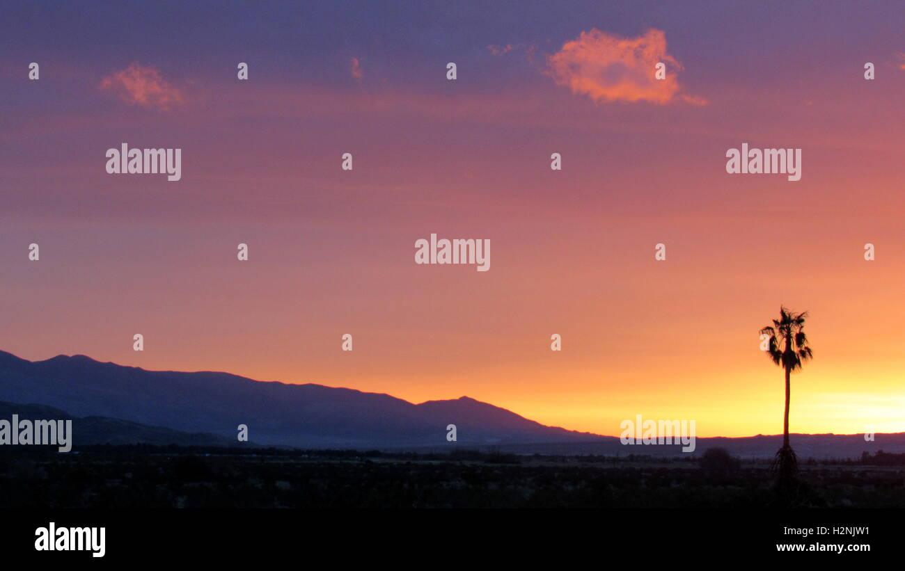 Single palm tree in desert California sunrise in Anza-Borrego Desert state park - Stock Image