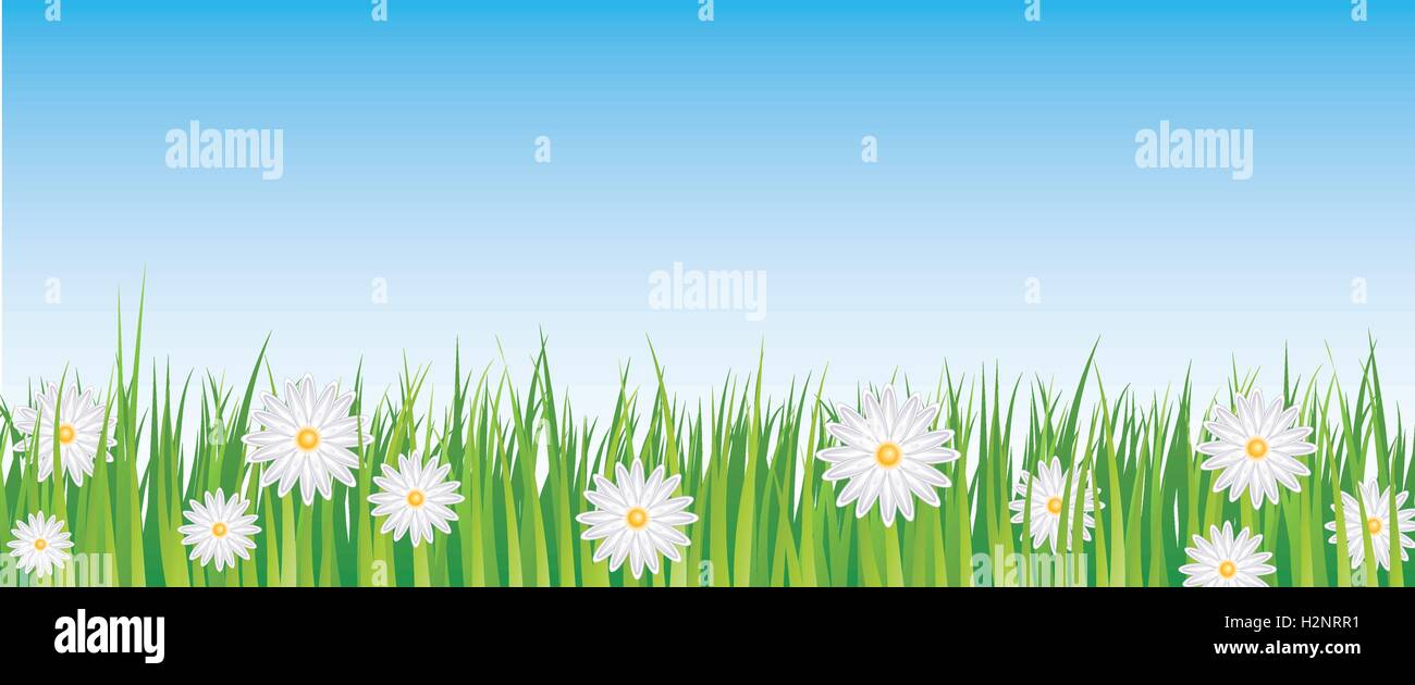 blue sky and daisies full vector banner - Stock Image