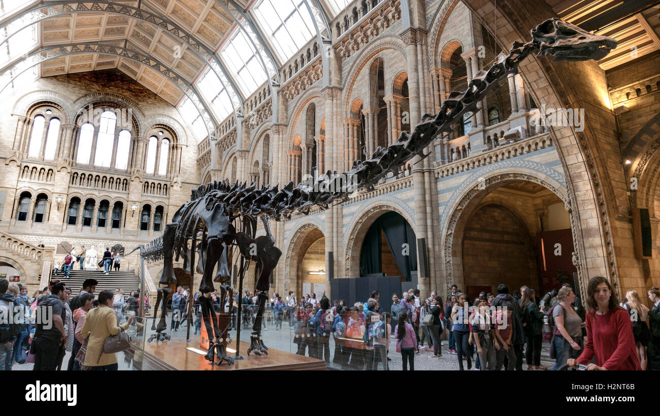 'Dippy' the Diplodocus Dinosaur at the Natural History Museum in London - Stock Image