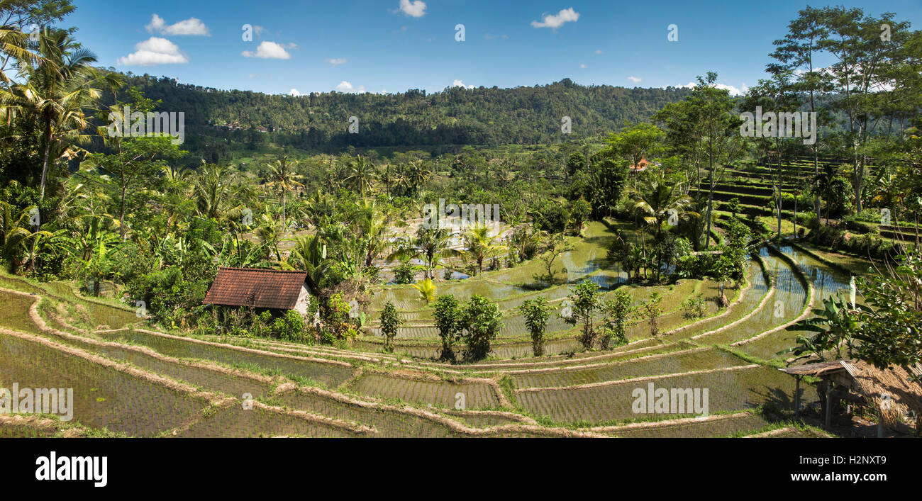 Indonesia, Bali, Sidemen, crescent of rice terraces on road to Semarapura, panoramic - Stock Image