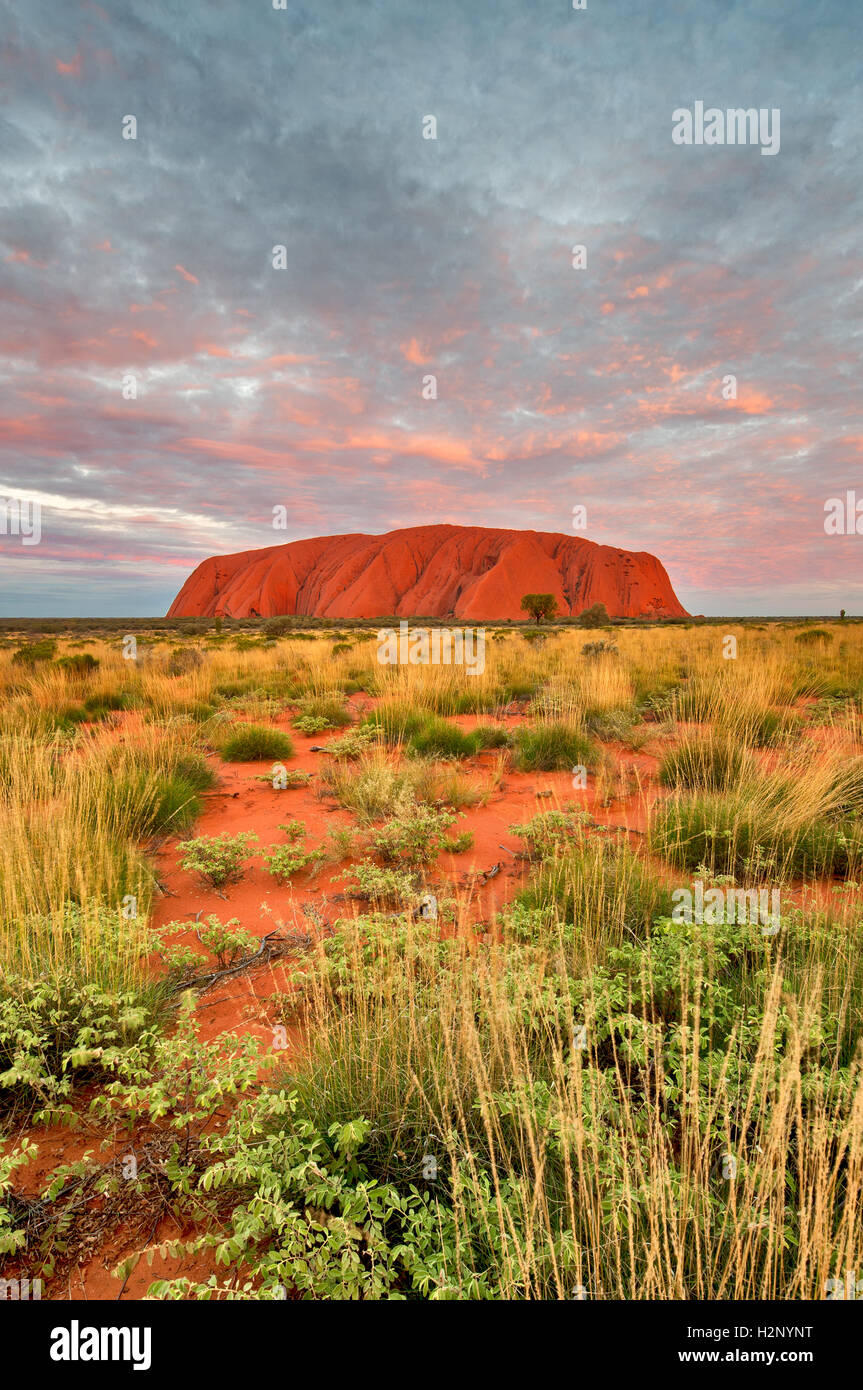 Majestic Uluru in afterglow. - Stock Image