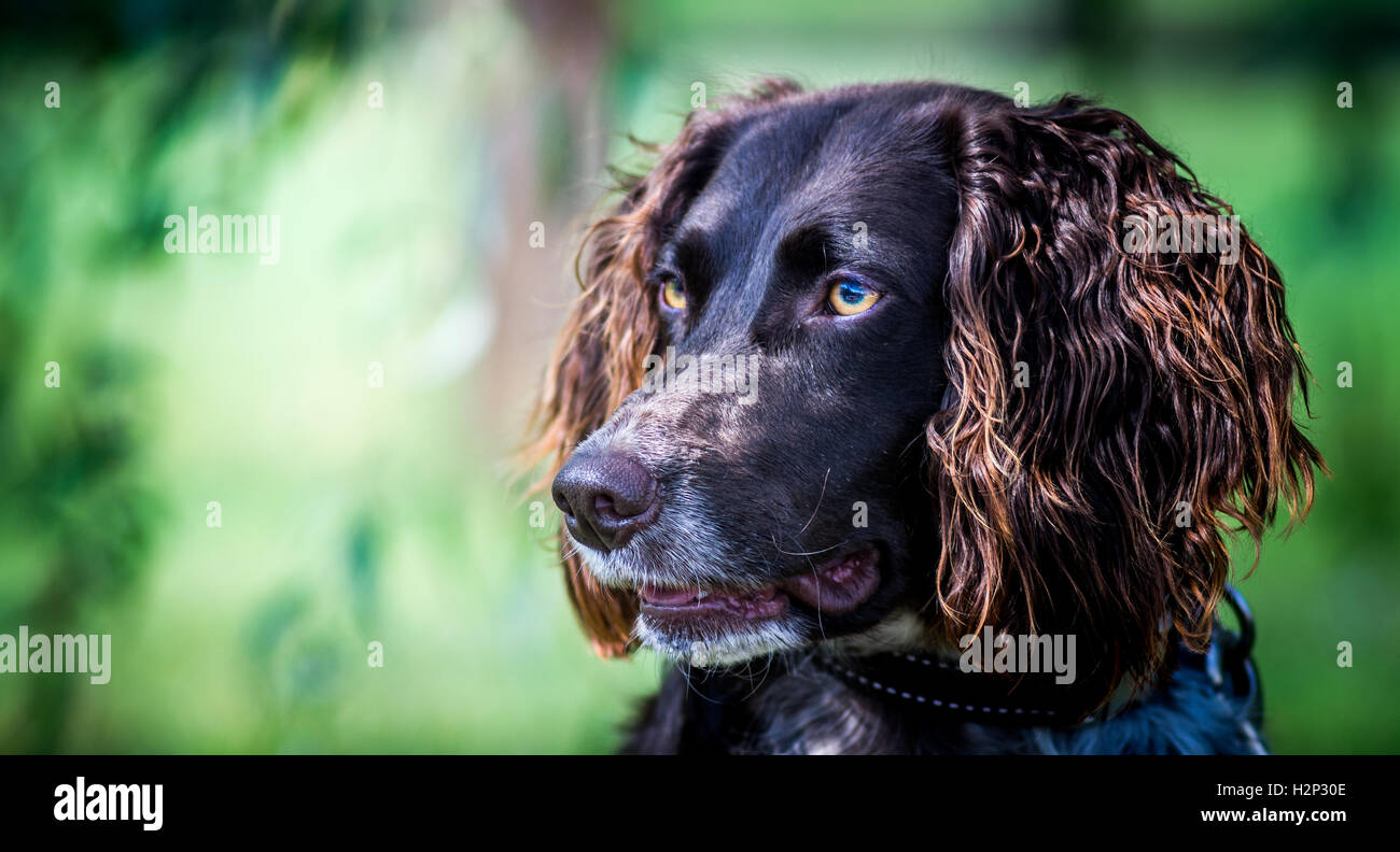 Dog looking for fun - Stock Image