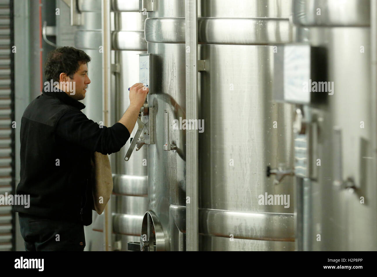 Winemaker Antoine Arnault rmakes notes on a vat at the winery of Hambledon Vineyard situated on the South Downs - Stock Image