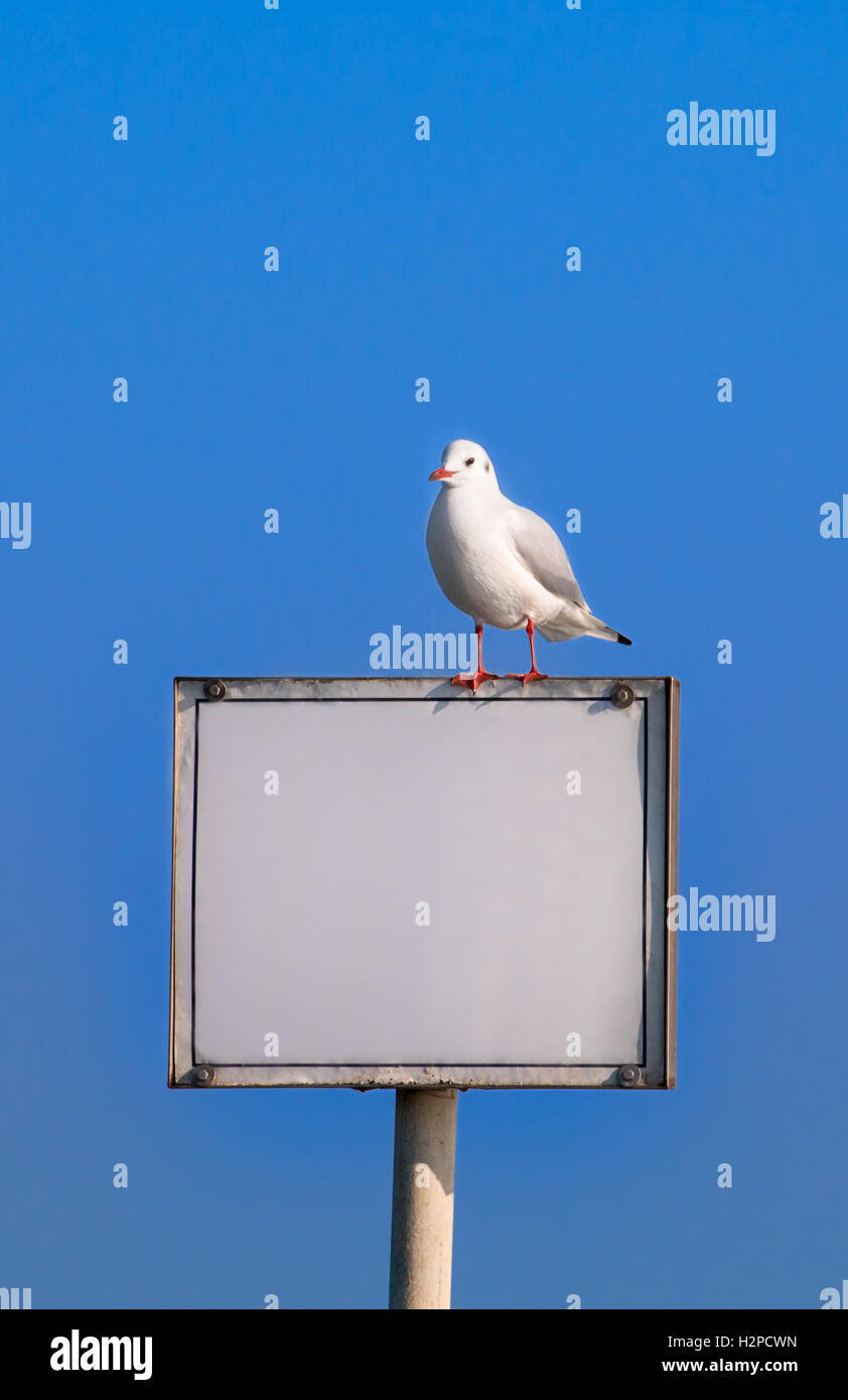 Information board with seagull on sky background - copyspace - Stock Image