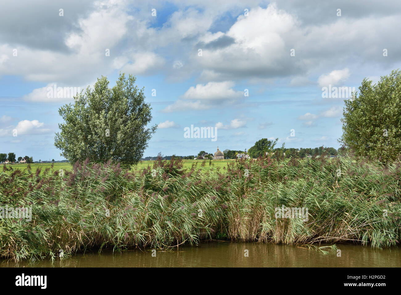 Reed Water Green Grass Farm Farming Landscape Friesland Fryslan Netherlands - Stock Image