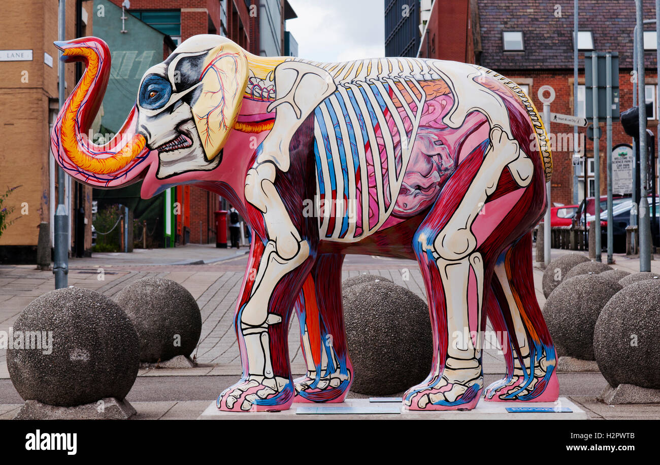 The Elephant Inside Out, designed by anatomist Gillian Higgins showing the internal organs of the Elephant. - Stock Image