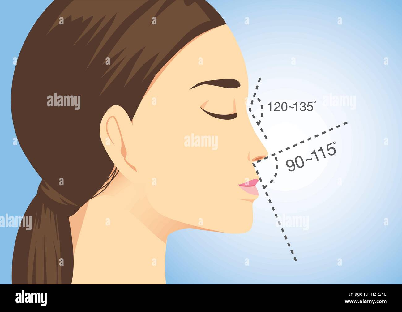 Ideal nose characteristics for woman. - Stock Image