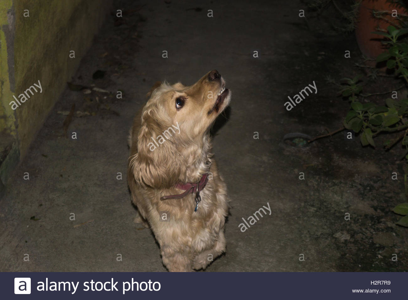 Lola looking for cats - Stock Image