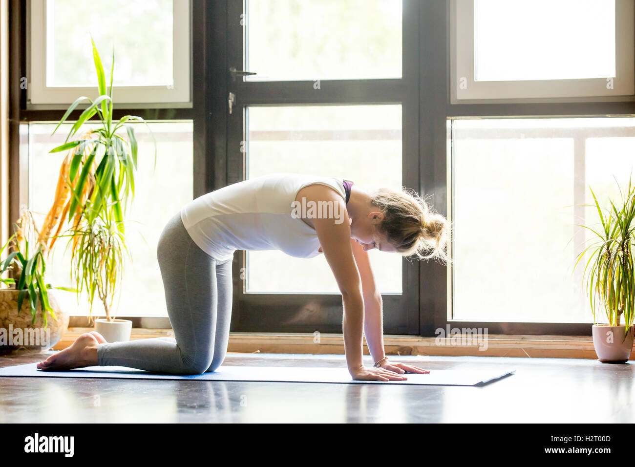 Yoga at home: Cat Pose - Stock Image