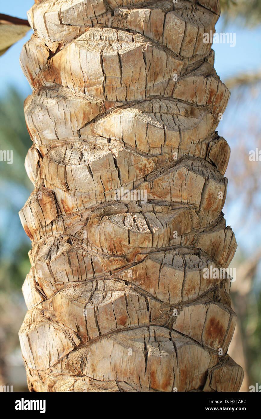 Palm Tree Trunk Texture Close Up Photo Stock Photo