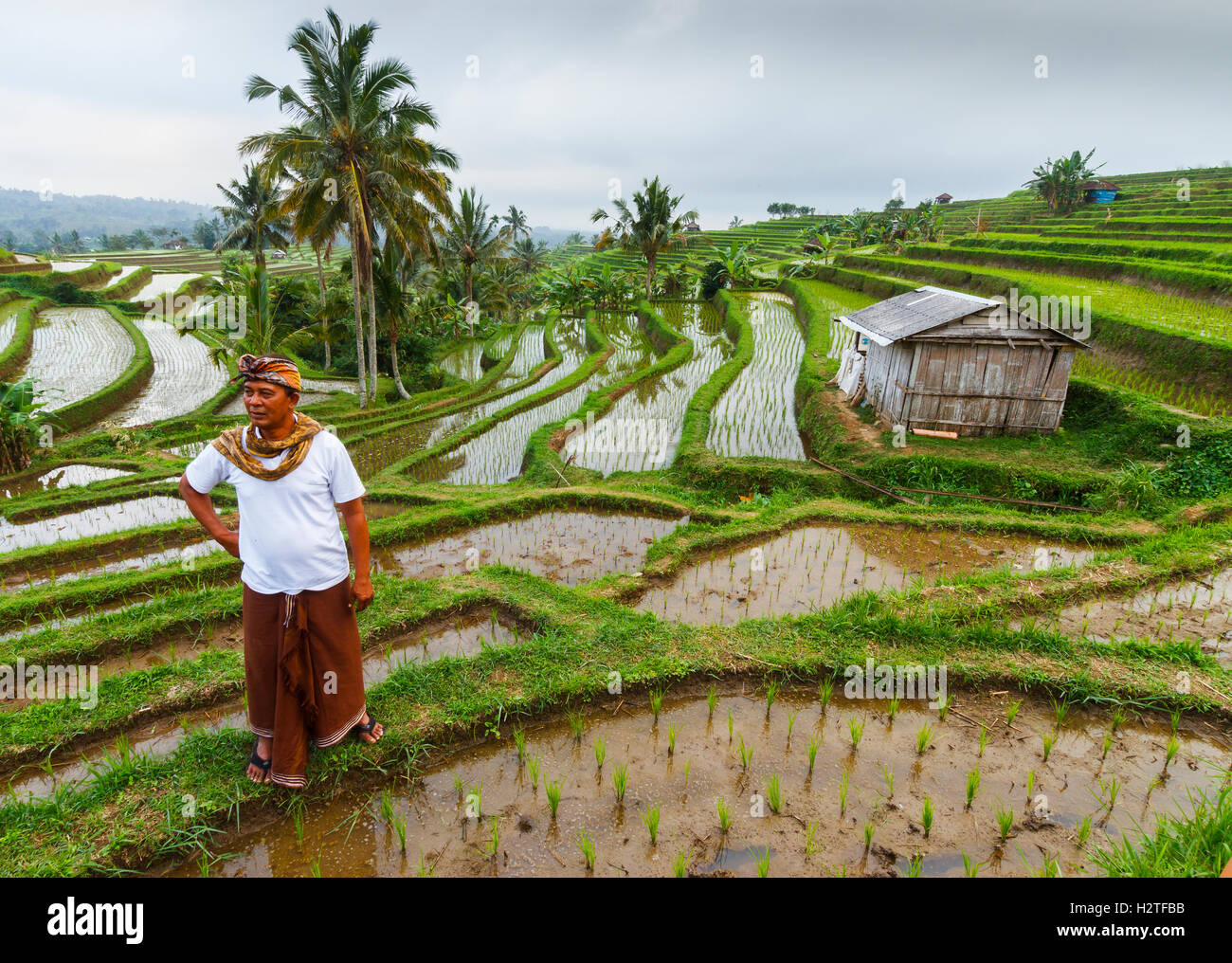 Man on Jatiluwih rice terraces. Bali. Indonesia, Asia. - Stock Image