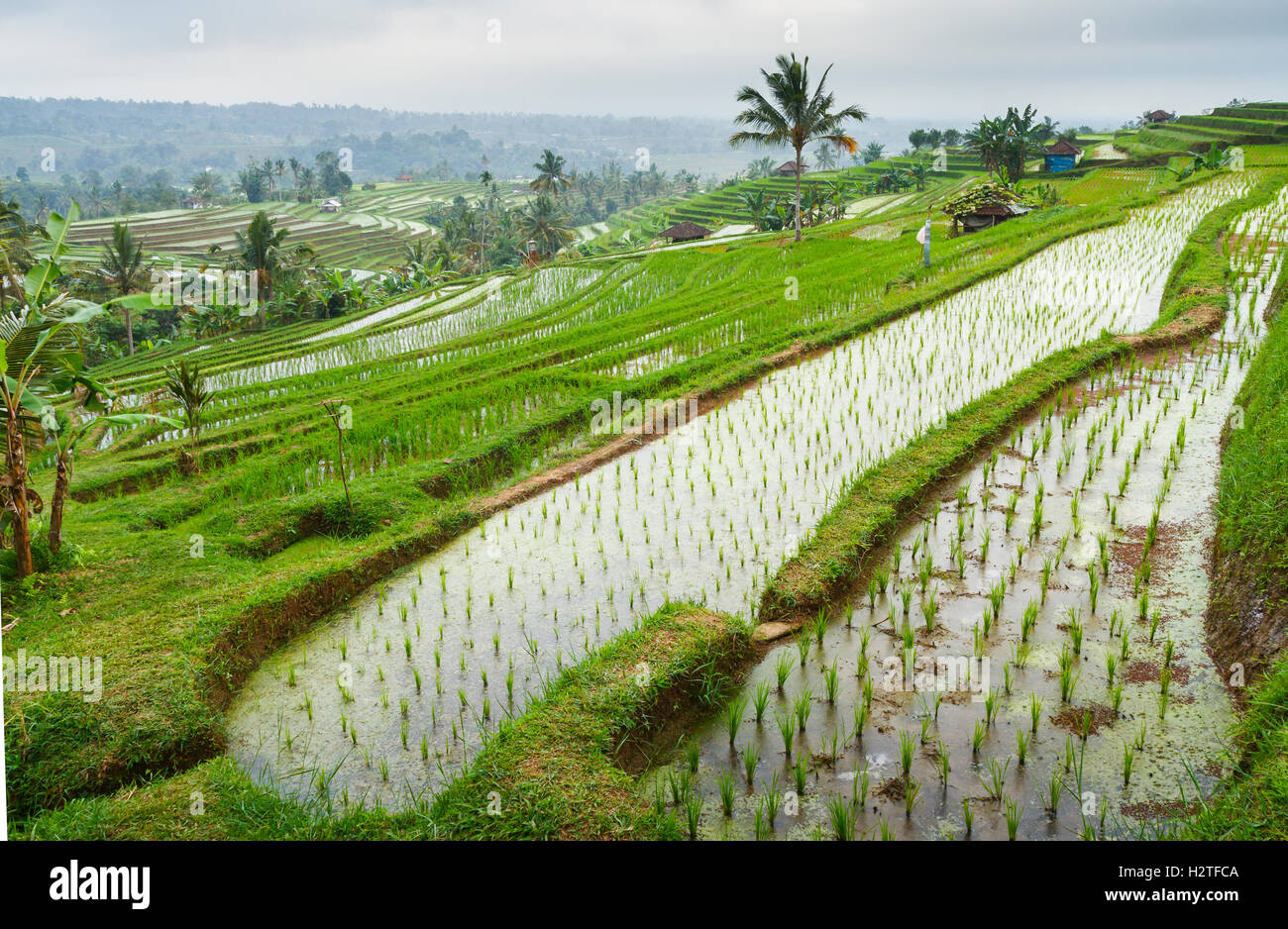 Jatiluwih rice terraces. Bali. Indonesia, Asia. Stock Photo