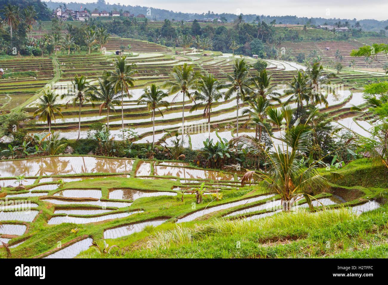 Jatiluwih rice terraces. Bali. Indonesia, Asia. - Stock Image