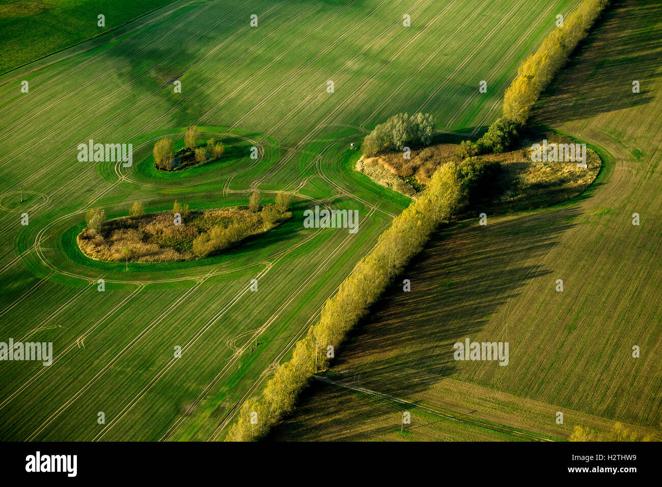 Aerial picture, bushes in the field, depression, Dargun, Müritz sea scenery, Mecklenburg-West Pomerania, Germany, - Stock Image