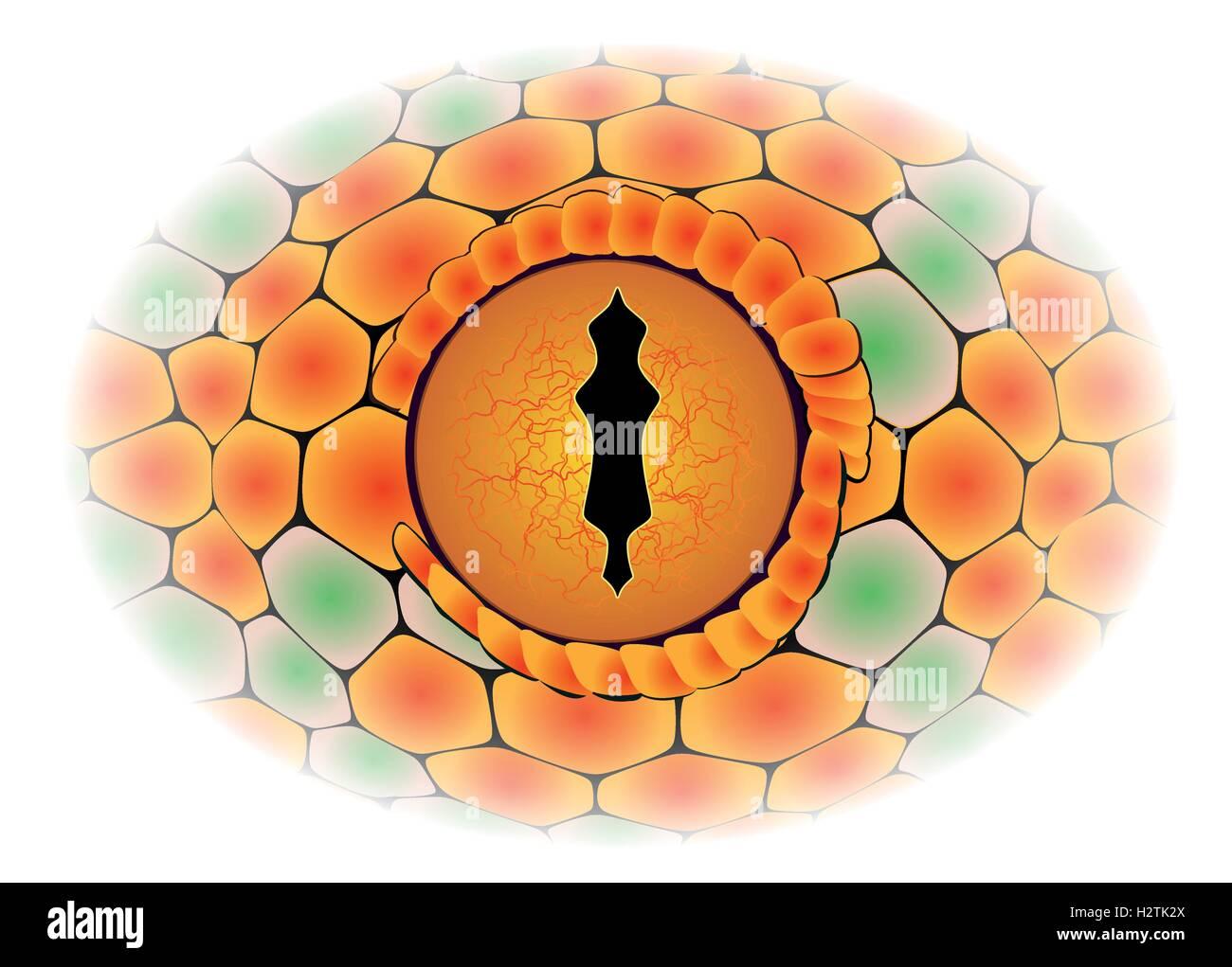 Vector illustration of the snake eye - detail - Stock Vector