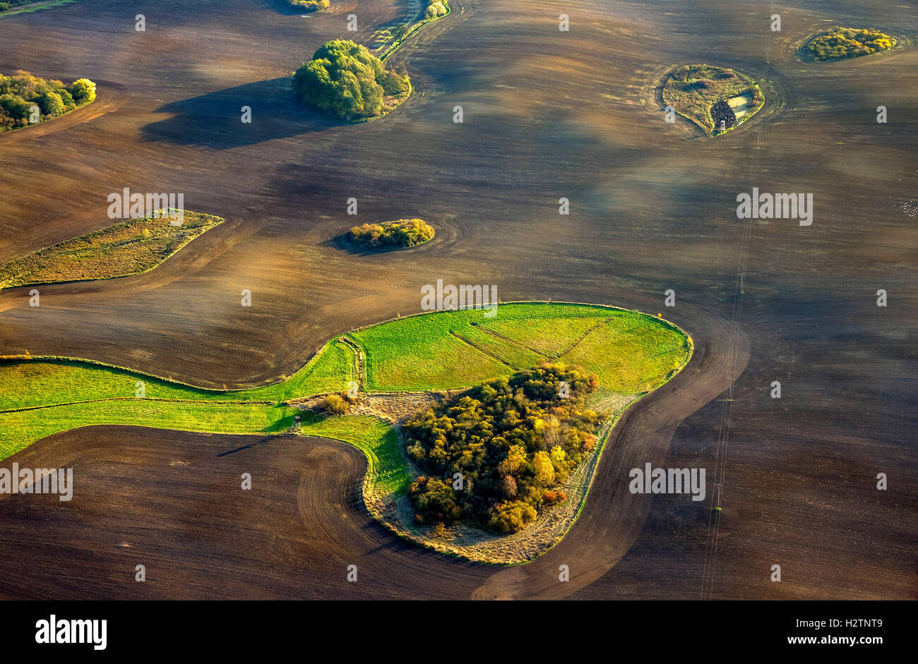 Aerial picture, fields, acres with enclosed meadow in the form of a dog head Snoopy, Hohenzieritz, Mecklenburg lowland - Stock Image