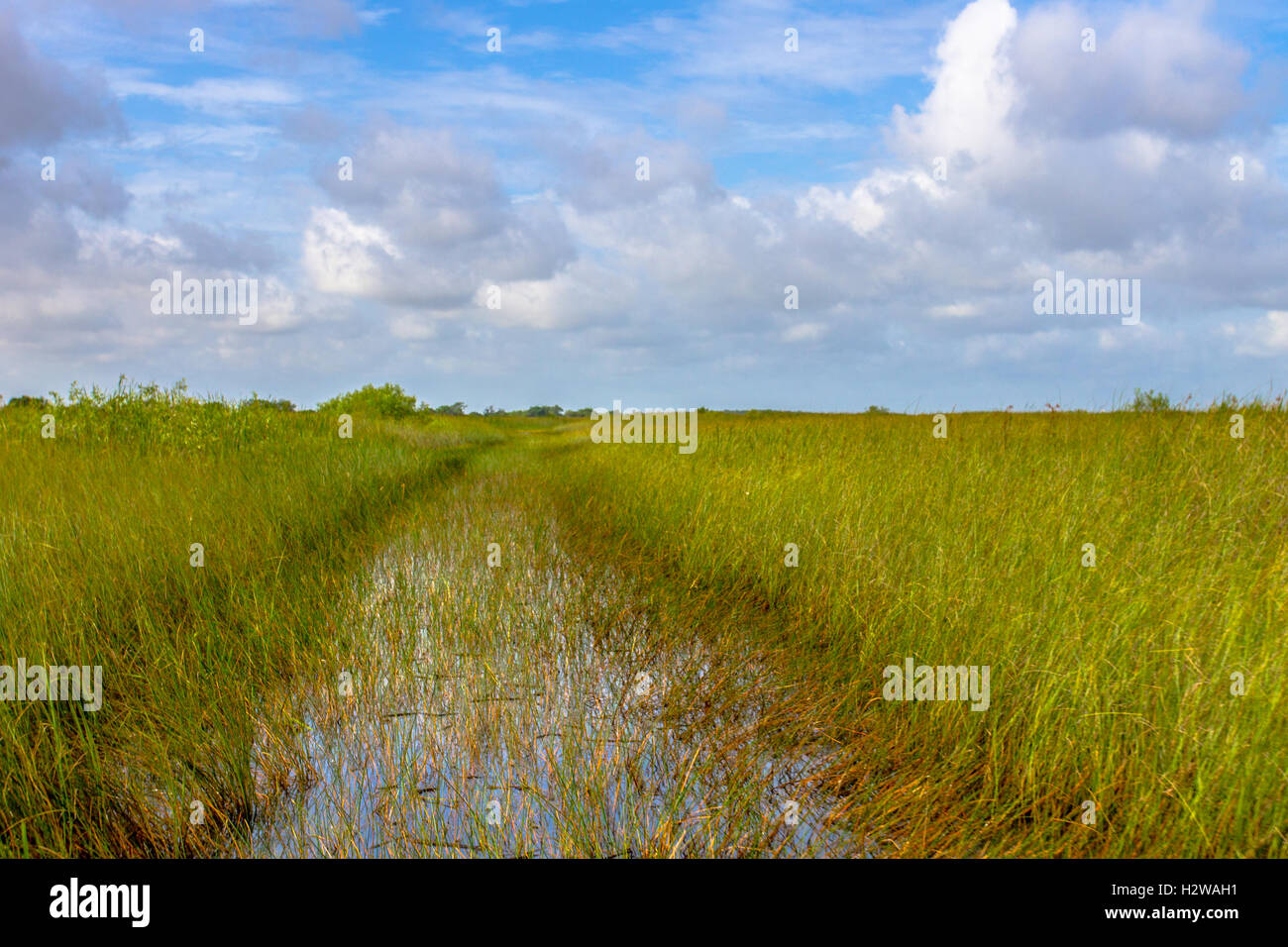Sun shining on the golden sawgrass in the Everglades National Park - Stock Image