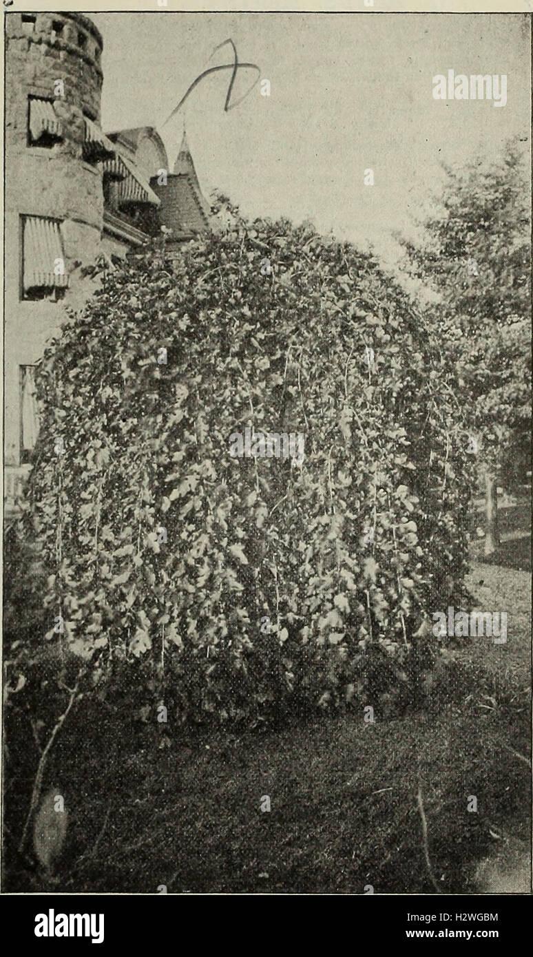 Descriptive catalogue - ornamental trees, shrubs, vines, evergreens, hardy perennials and fruits (1902) (2037757 Stock Photo