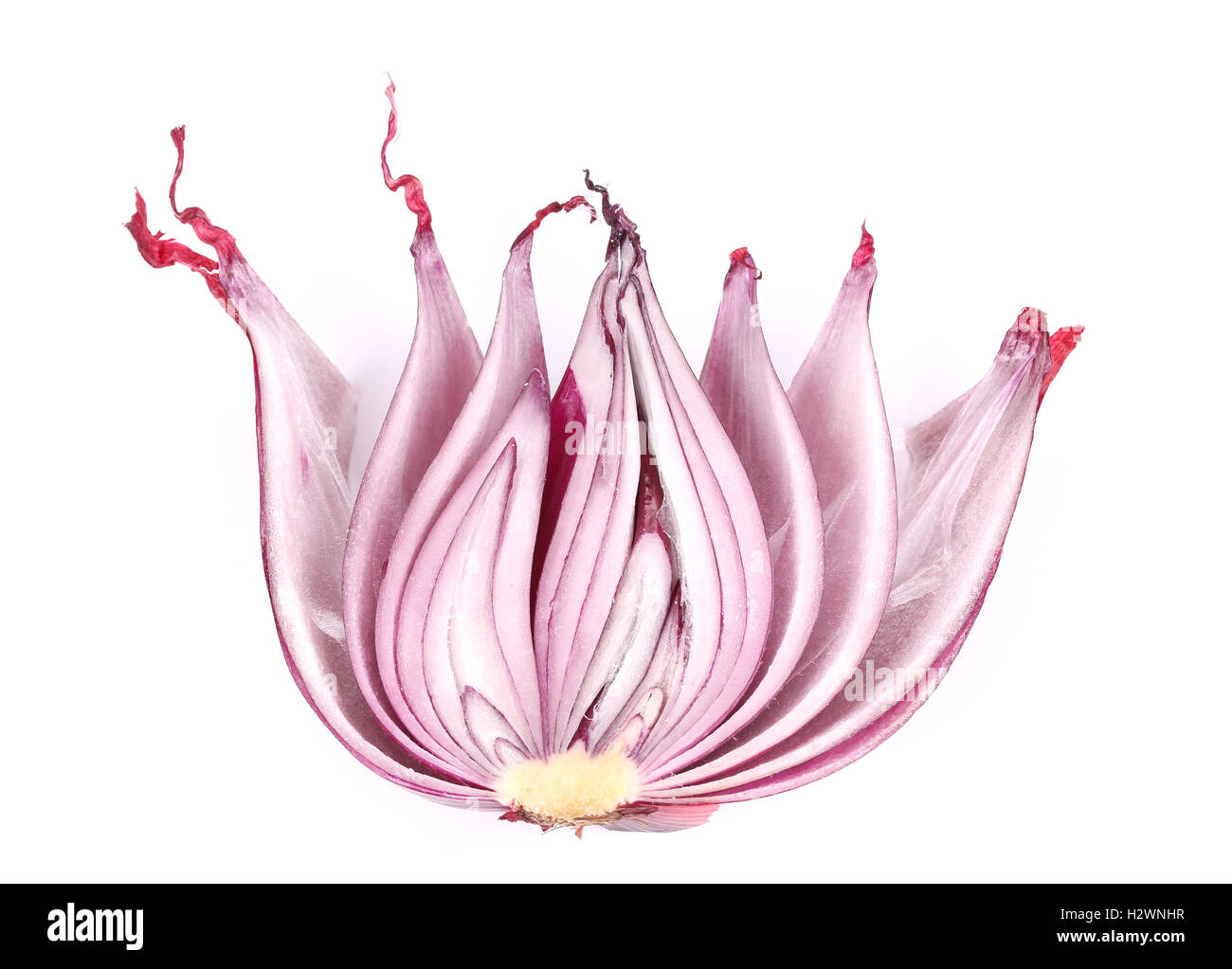 Close up of red onions half. - Stock Image