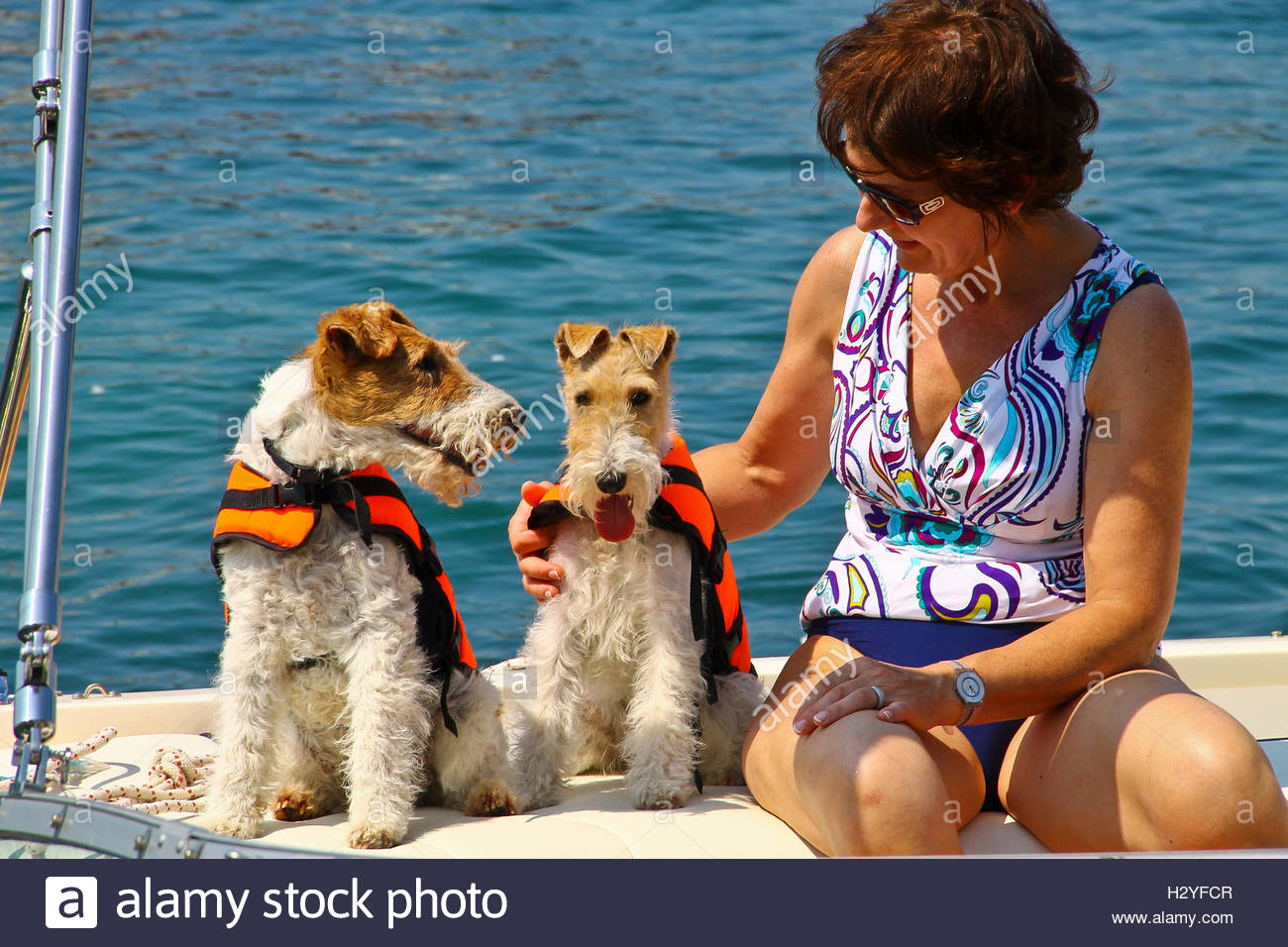 Safe For Pets Stock Photos & Safe For Pets Stock Images - Alamy