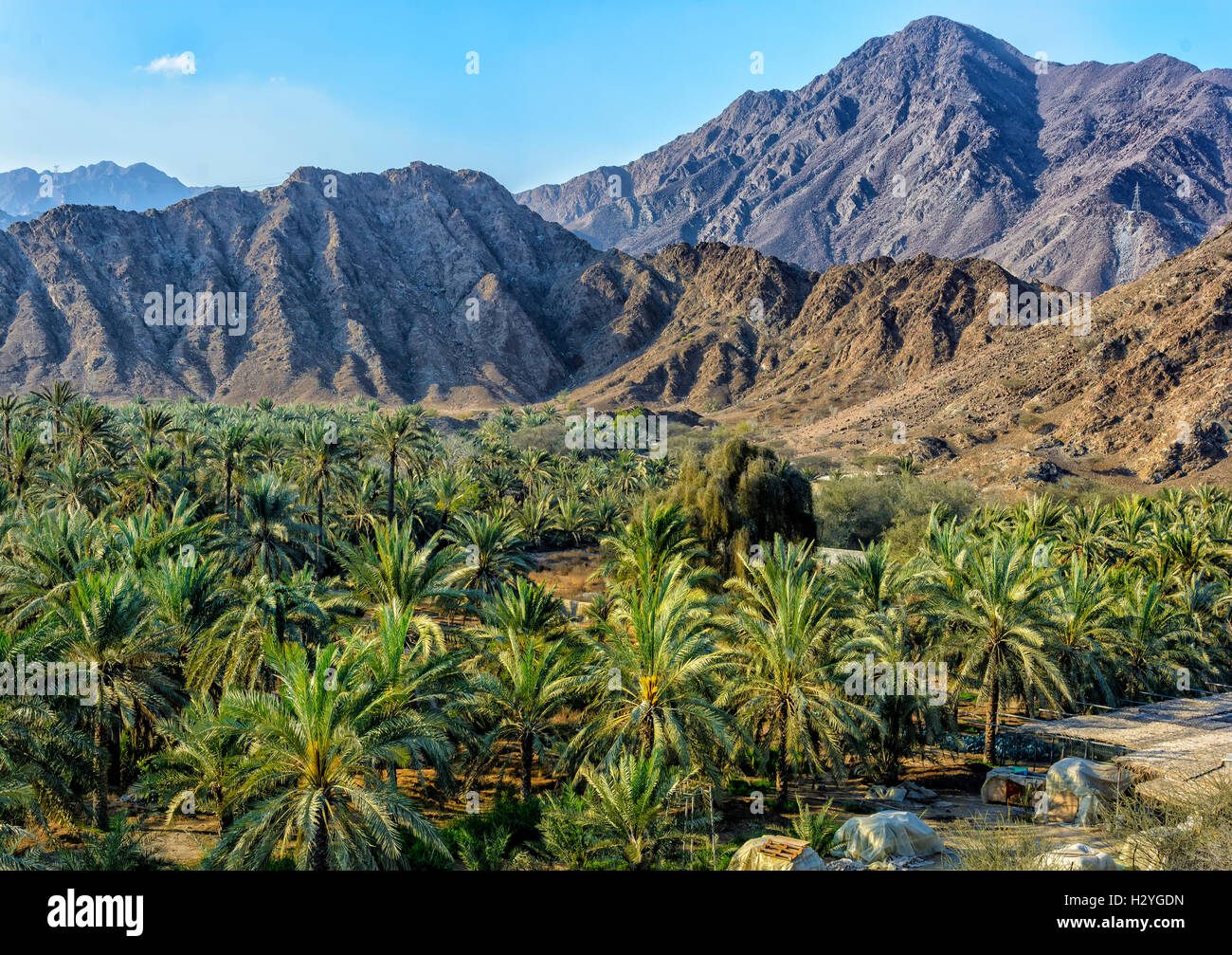 Oasis with palm trees in the Hajar Mountains, Fujairah, United Arab Emirates - Stock Image