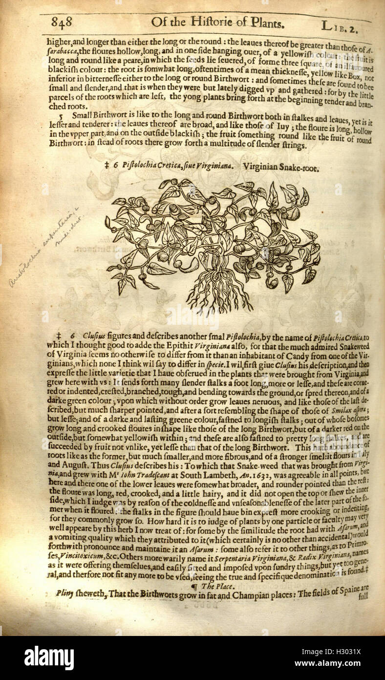 The herball, or, Generall historie of plantes (Page 848) BHL84 - Stock Image