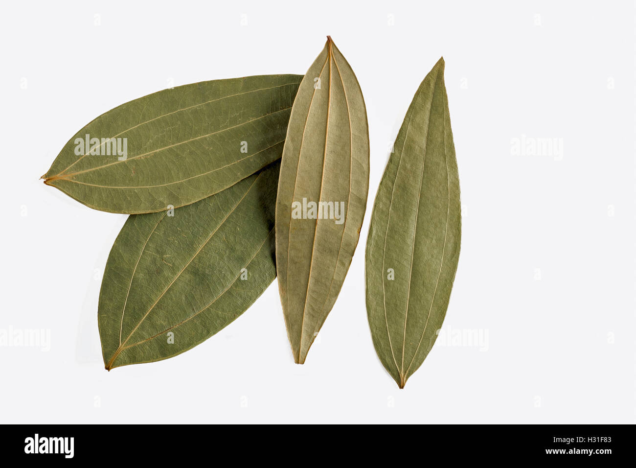 dried Indian bay leaf or tejpatta on a white background - Stock Image