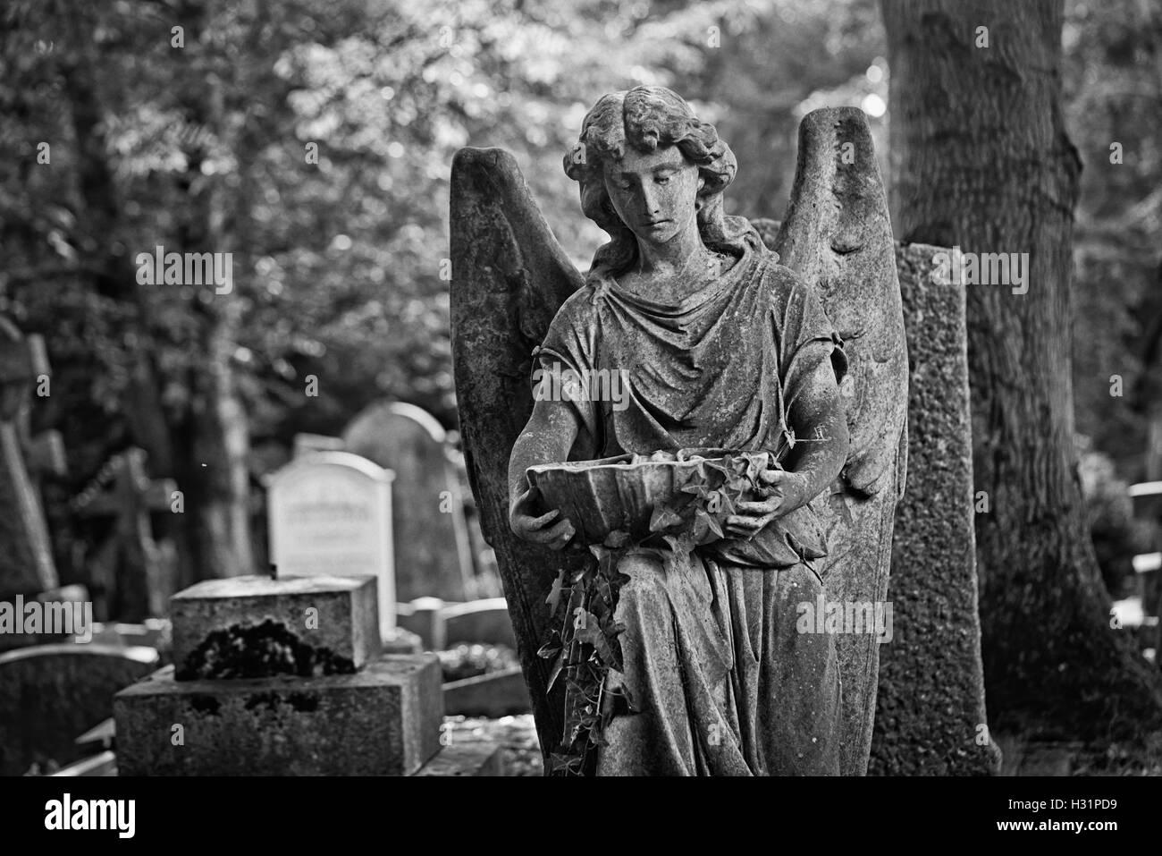 Angel with stone water chalice gravestone tombstone at Highgate Cemetery East in London, England. - Stock Image
