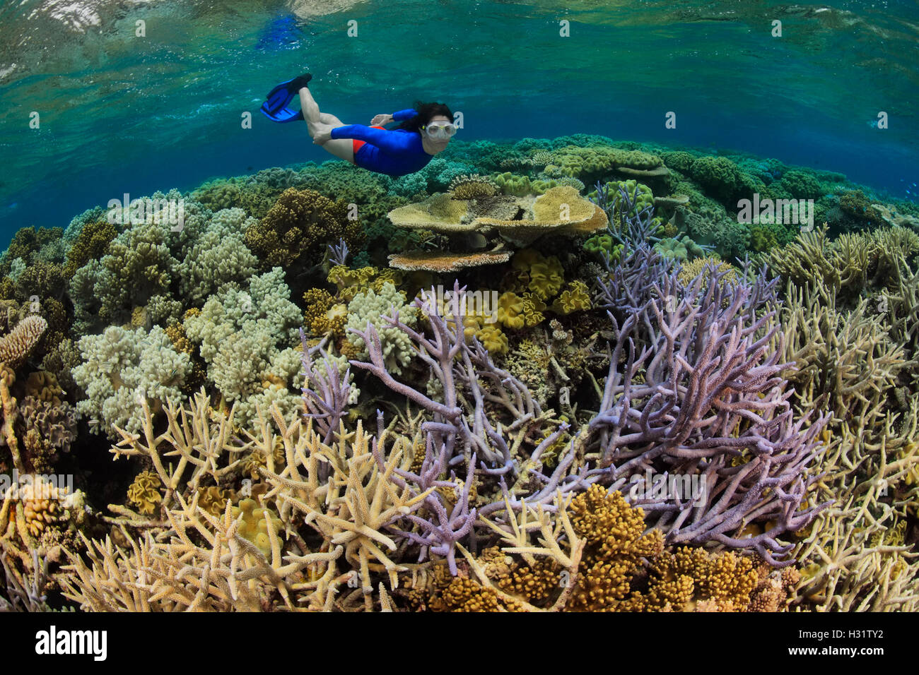 QZ0765-D. Woman (model released) snorkels over hard and soft corals on a healthy coral reef in the Great Barrier Stock Photo